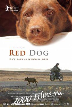 Рыжий пес / Red Dog (2011) BDRip | Лицензия | HD 720